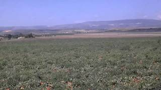 Foggia – raccolta del pomodoro