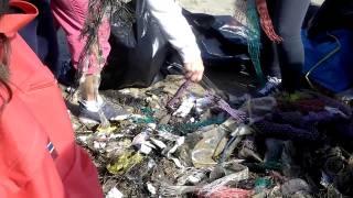 Rodi Garganico – pulizia spiagge – Legambiente