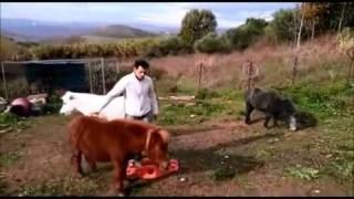 A Natale un pony per regalo