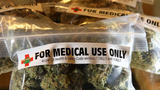 Grazia potrà curarsi con la cannabis, i Cinquestelle esultano