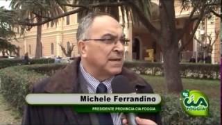 Tg Cia Foggia, edizione 7 marzo 2016
