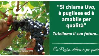 La CIA Puglia punta sull'Agricoltura 100% Italiana, e i grappoli…parlano