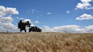 Oro di Puglia #60seconds video