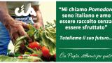 """Cia Puglia, """"Tregua sul pomodoro, ma ora programmiamo"""""""