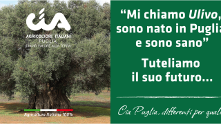 """Olio di Capitanata: un """"bio"""" tour in 4 tappe"""