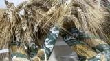Campagna del grano 2017: i primi dati