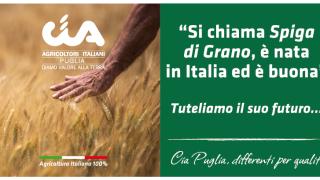 """Grano, Cia Puglia: """"Non si speculi sulla pelle degli agricoltori"""""""