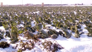 Danni neve e gelo, risarcimenti anche per le aziende non assicurate: ecco le misure