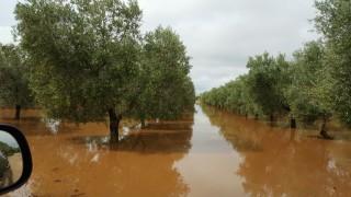 Xylella, la zona cuscinetto sempre più a nord della Puglia