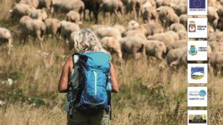 Strade erbose, storia e futuro della transumanza a Lucera