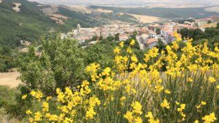 Tutte le sagre di Alberona: il programma