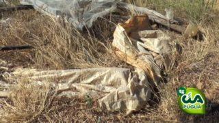 Sei mesi di niente per gli agricoltori della Puglia