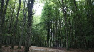 Dal PSR, 110 milioni per le foreste della Puglia