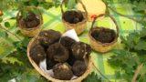 Miele, vino e tartufo: fine settimana spettacolare a Roseto