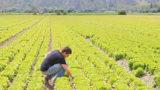 Terreni incolti, bando per l'assegnazione e contributo fino a 500mila euro