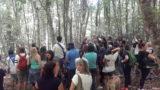 Foresta Umbra, sul Gargano il compleanno dei faggi secolari