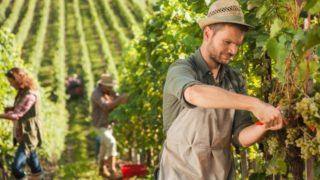 La scuola è andata male: per diplomarti e lavorare saresti disposto a fare l'agricoltore?
