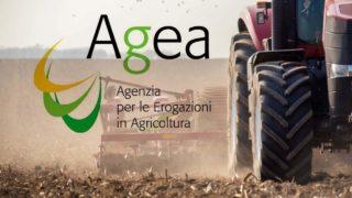 I ritardi di Agea, blocco dei pagamenti per gli agricoltori
