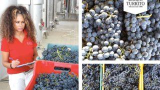 E' foggiano uno dei tre vini migliori del Sud Italia