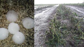 Candela, la grandine fa danni: colpiti grano, ortaggi e frutteti