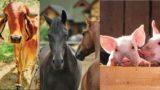 Zootecnia, iscrizioni gratuite ai workshop in tutta la Puglia