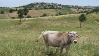 Il Comune di Monteleone di Puglia entra nell'Anpr