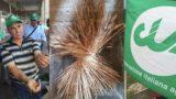 Per un pugno di grano duro: la Puglia verso un calo del 20-30% dei raccolti, colpa di gelate e siccità